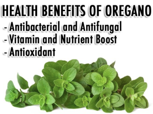 Alkalizing Health Benefits of Oregano