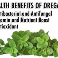 Alkalizing Health Benefits of Oregano