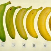 Are You Going Acid Over Bananas?