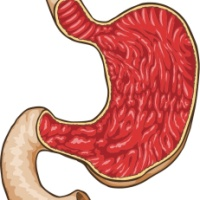 Understanding the pHysiology of the Stomach - An Alkalizing Organ