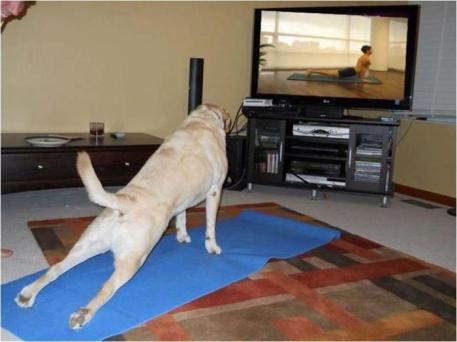 Doggie Yoga