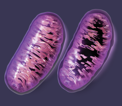 https://phoreveryoung.files.wordpress.com/2015/05/mitochondrial-damage-big-pharma-400x350.png