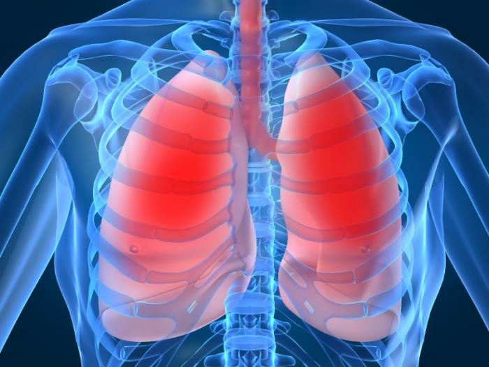 the-lungs-in-the-body