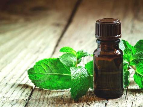732x549_Peppermint_Oil_And_Headaches