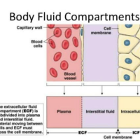 Can the Chemistry Including the pH of the Blood and Interstitial Fluids of the Interstitium be Altered by YOUR Lifestyle and Dietary Choices?